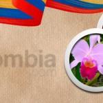Pronosticuri fotbal Columbia vs Ecuador – 6 ponturi esentiale