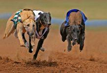 pariuri sporturi virtuale casa pariurilor